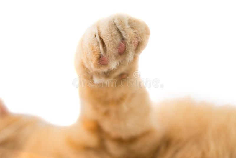 Download Cat paw isolated stock photo. Image of pretty, beauty - 35211574