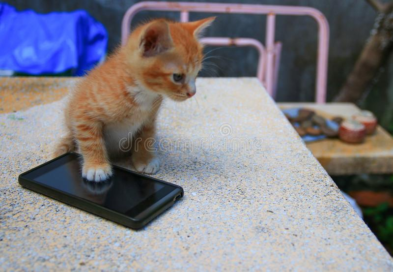 Cat paw of kitten orange-red small on cell phone Select focus with shallow depth of field stock image