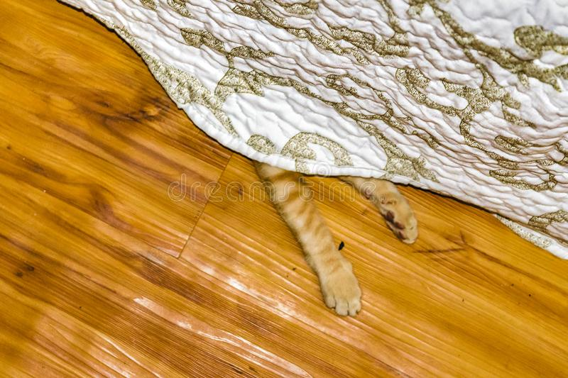 Cat paw peeking under the bed royalty free stock images