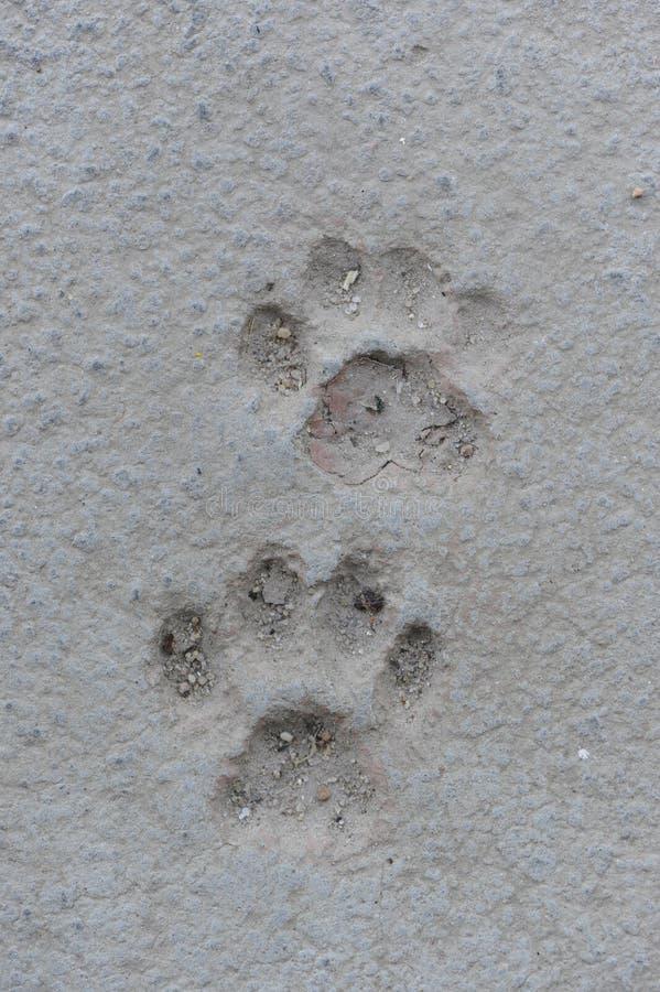 Cat Paw Prints in calcestruzzo immagini stock libere da diritti