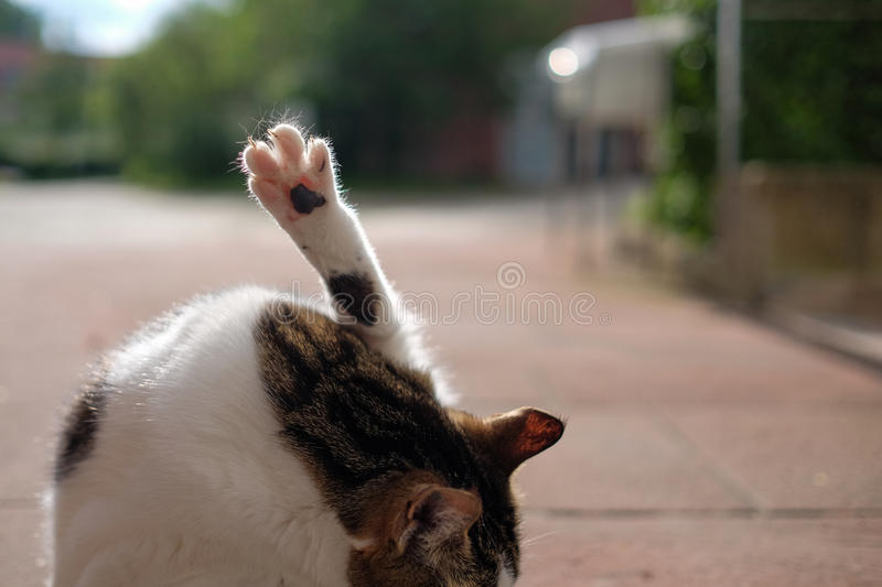 Cat paw. Cat raising paw in the air royalty free stock photography
