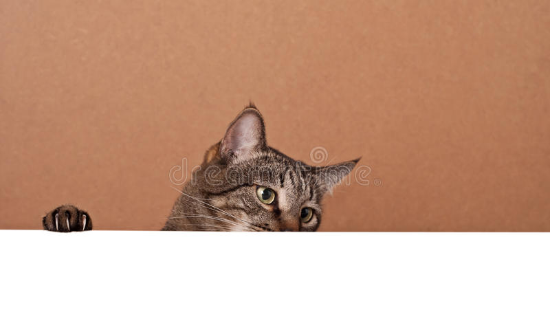Cat peek out from behind white paper. Place for your text stock photo