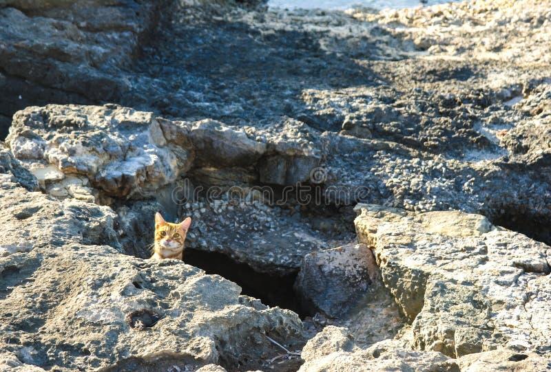 A cat peeking above the rocks stock image