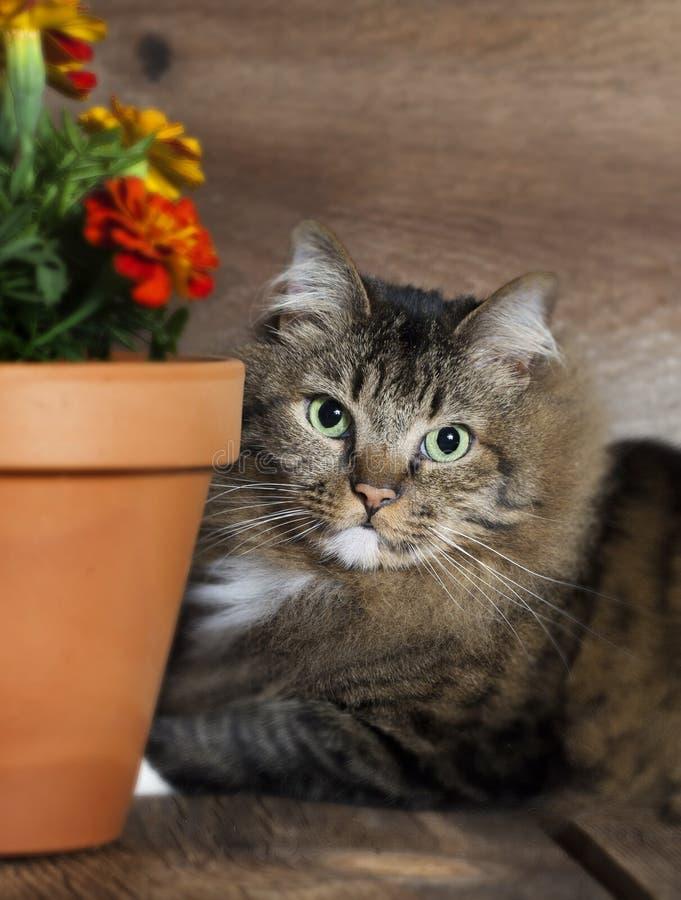 Cat Peeking runt om blomkrukan royaltyfri bild