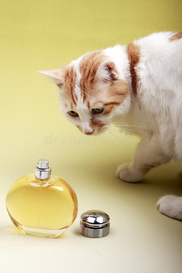Download Cat and perfume stock photo. Image of aromatherapy, fragrance - 10416738