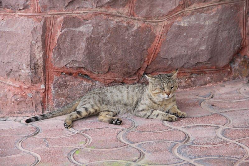 Cat, persian, comfortable, Iran stock image