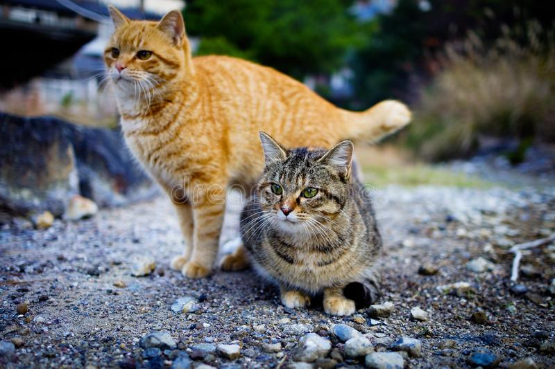 Cat. Pet animal cat royalty free stock images