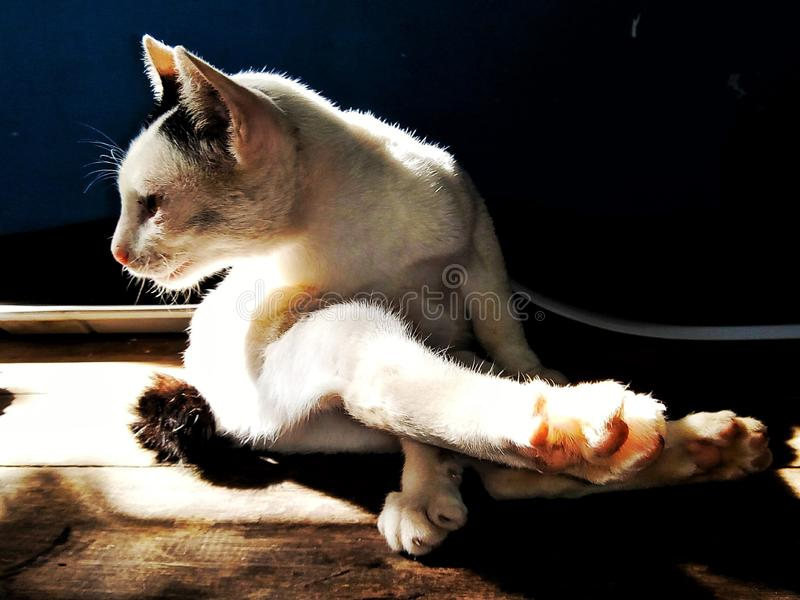 Cat, Pet, Animal, Cute, Itchy, Scratching stock image