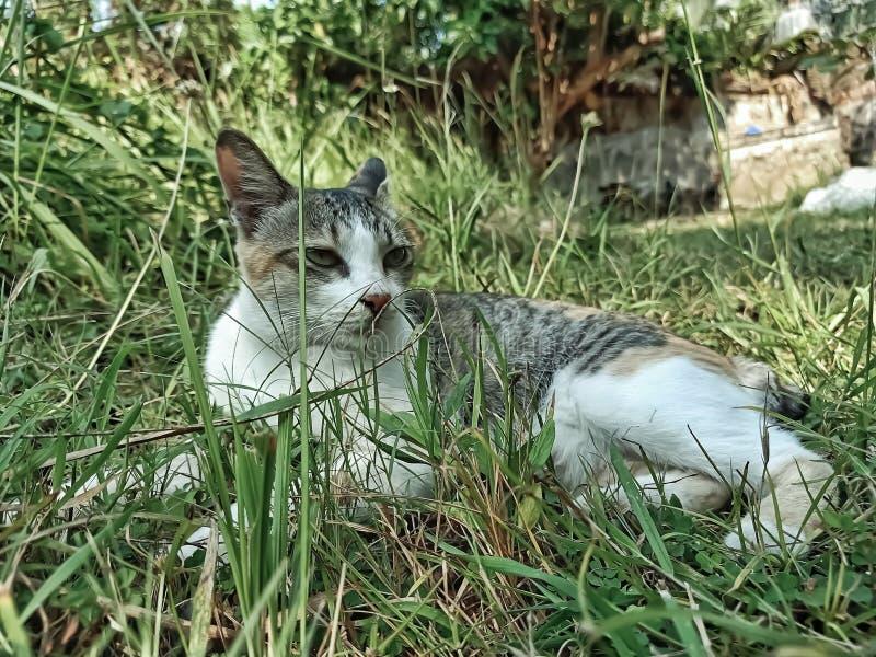 Cat. Pet, animal, hairy, gress stock photo