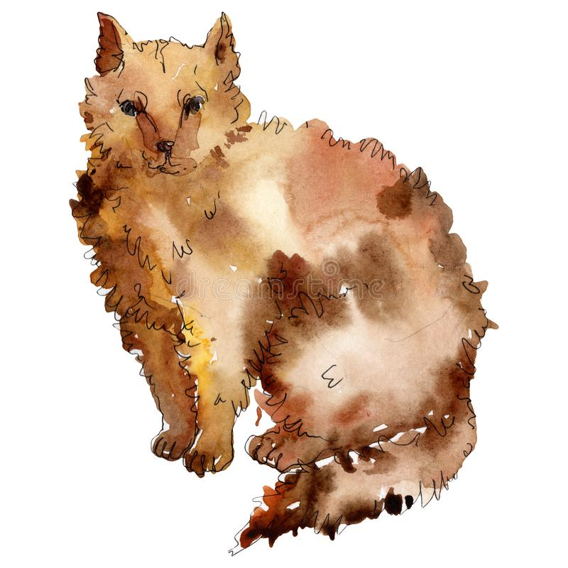Cat pet animal isolated. Watercolor background illustration set. Isolated animal illustration element. stock illustration
