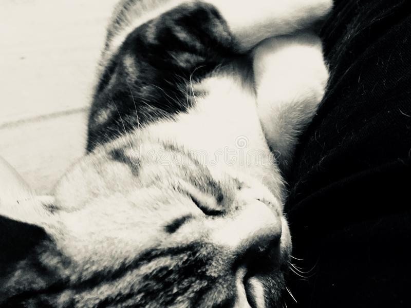 Cat pet lovely cute sleep. Cat pet lovely Stick people sleep cute docile Black and white friend emotion small tiny rely royalty free stock photos
