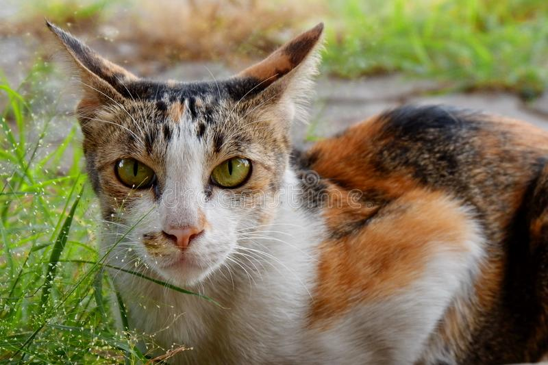 The cat is a pet, very cute. The cat is a pet, very cute stock photo
