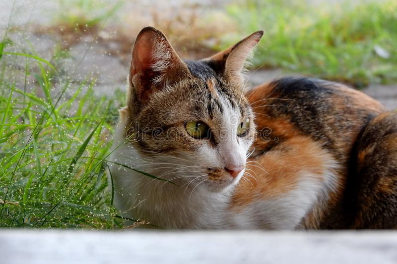 The cat is a pet, very cute. The cat is a pet, very cute stock photos