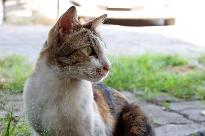 The cat is a pet, very cute. The cat is a pet, very cute stock image