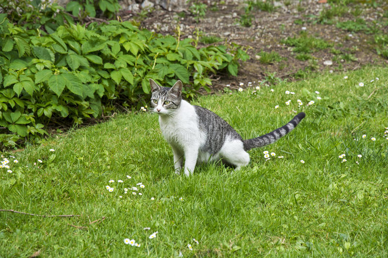 Cat. Photo of a cat with green grass, selective focus and sunlight royalty free stock photo