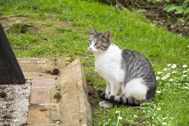 Cat. Photo of a cat with green grass, selective focus and sunlight stock photo