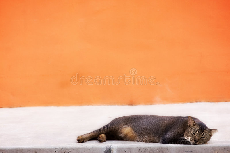Cat photo - Sleepy. Cat with brown fur sleeping on a white floor with a orange background royalty free stock image
