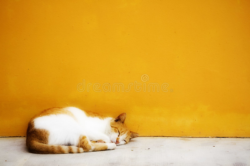 Cat photo - Sleepy kitty. Cat sleeping against a clean yellow wall and white floor stock photos