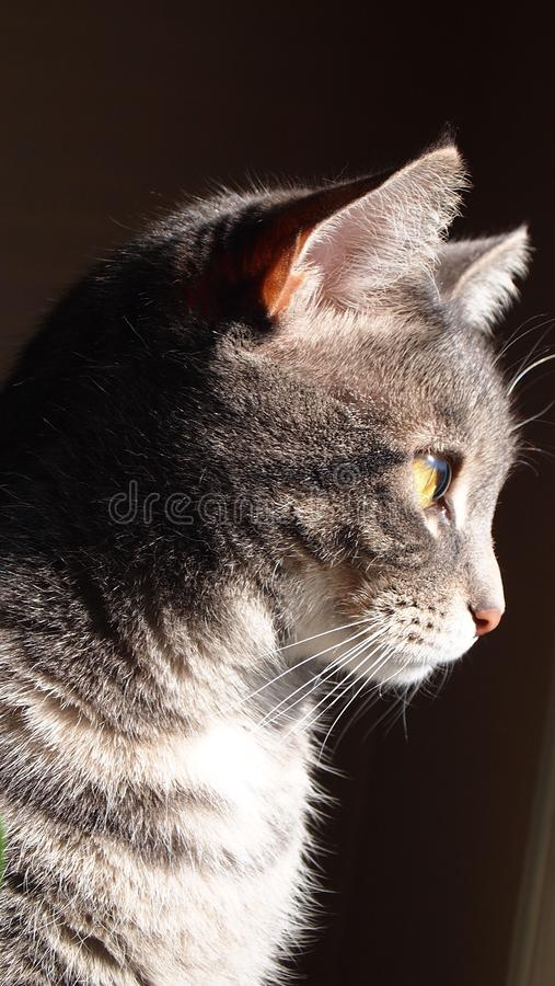 Cat. Photo taken with an Olympus Pen camera royalty free stock images
