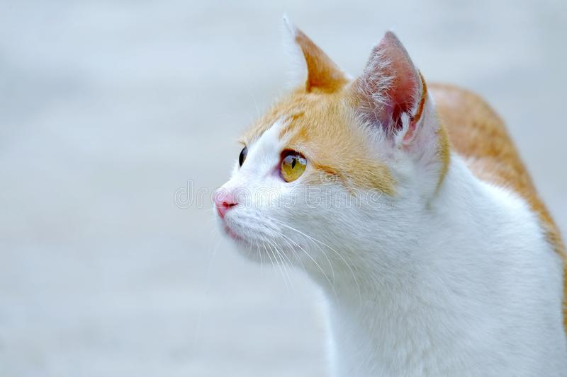 Cat photographed from the side. Looking forward with a serious stare stock photo