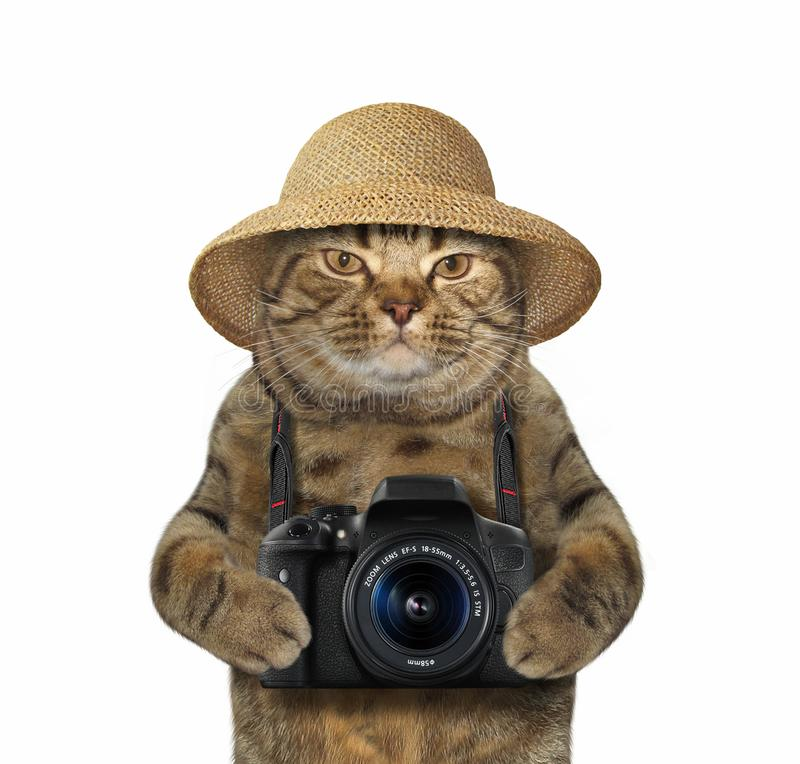 Cat with camera 2 stock image