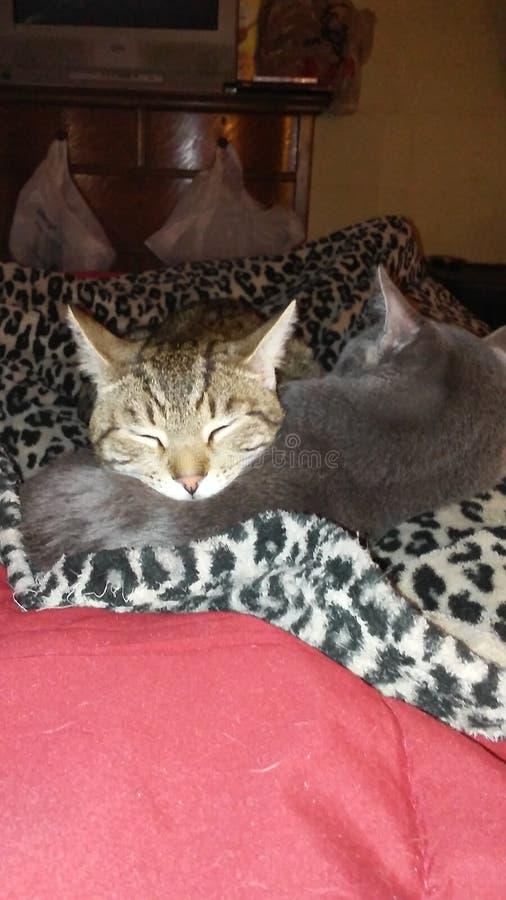 Cat Photography stock afbeelding