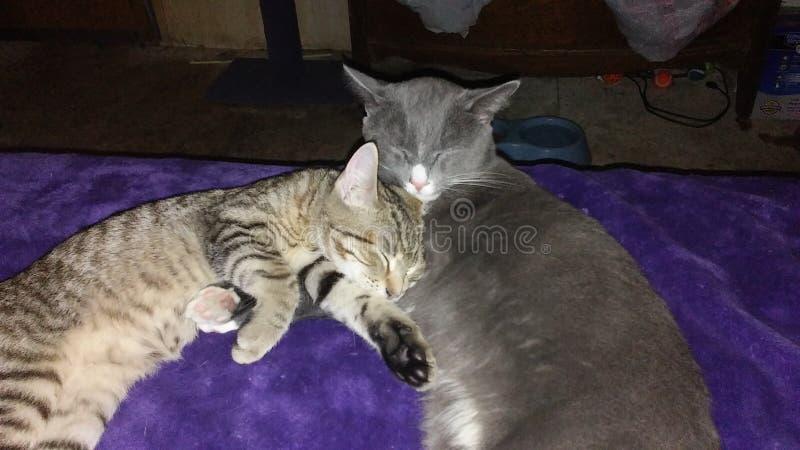 Cat Photography royalty-vrije stock foto's