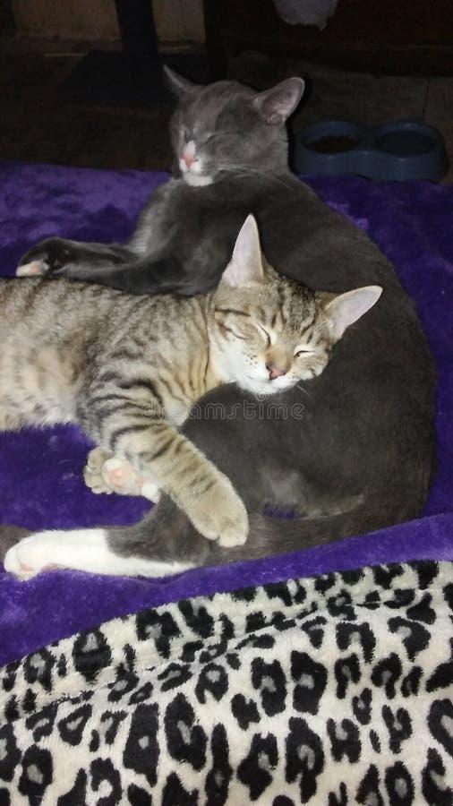 Cat Photography royalty-vrije stock afbeeldingen