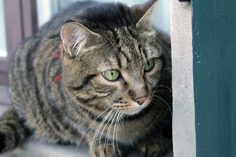 Cat Photography photo libre de droits