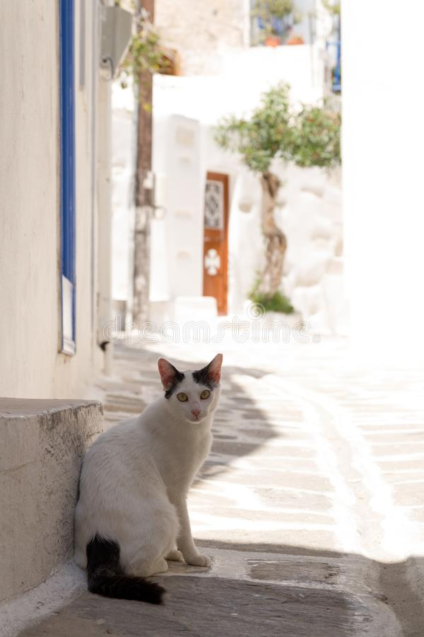 Cat in a picturesque street on a greek island. Greek street with cat on paros island stock photos