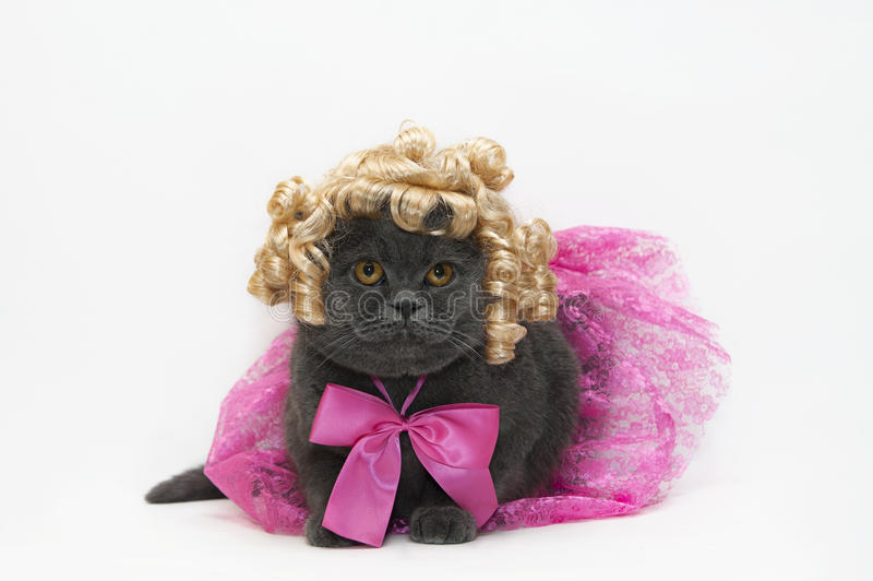 Download Cat in a pink dress stock photo. Image of care, dress - 28378534