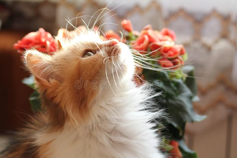 Cat with pink flowers stock images