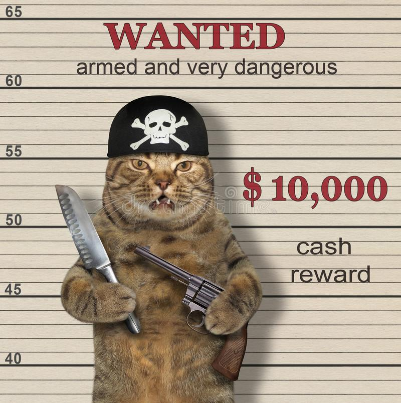 Cat pirate is wanted stock photography
