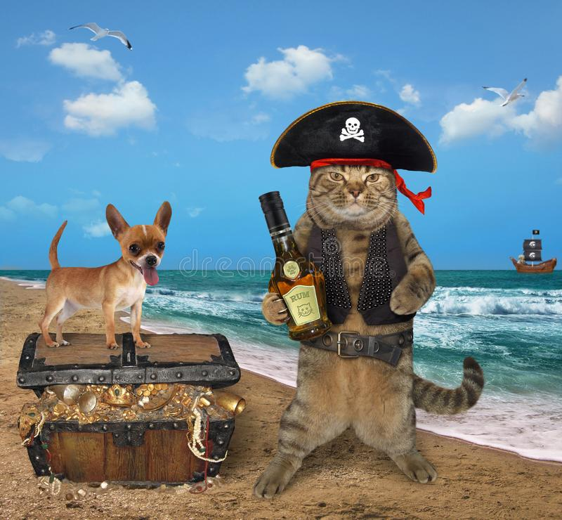 Cat pirate with his dog near the treasures. The cat pirate with his dog is next to a chest full of treasures on the seashore royalty free stock photos