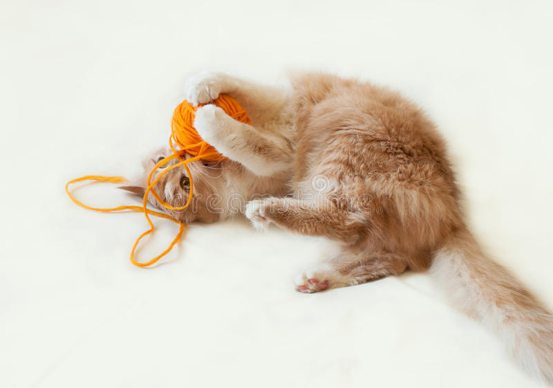 Cat playing with a ball stock photos