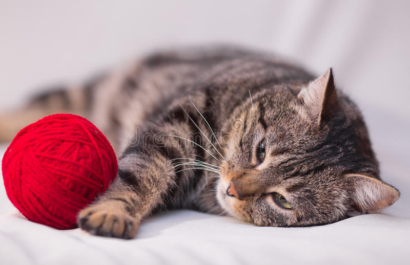 Cat playing with ball of red yarn stock photography