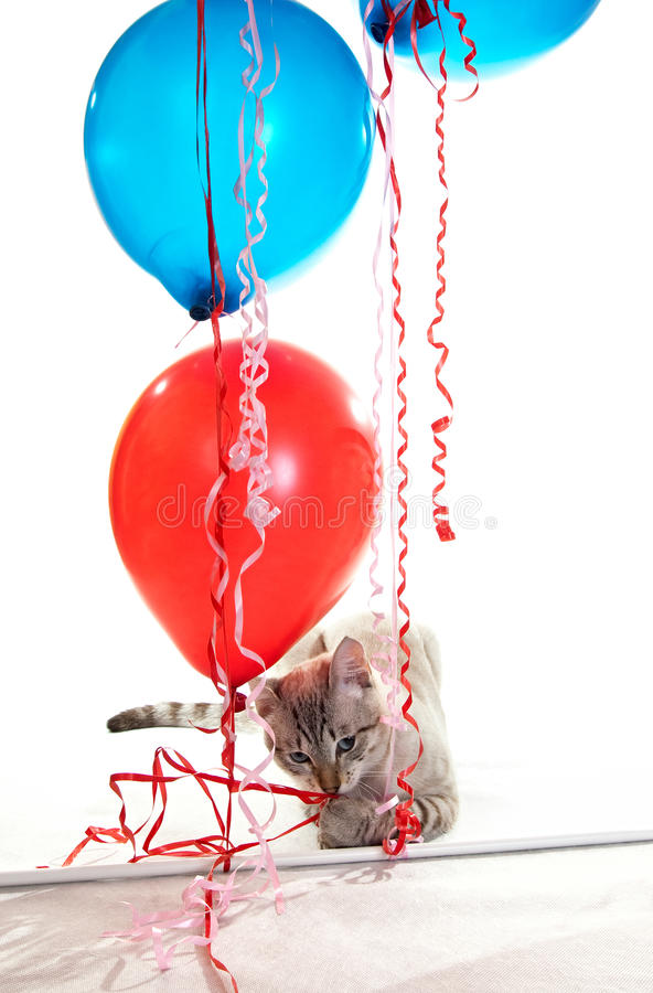 Cat playing with balloons. royalty free stock photography