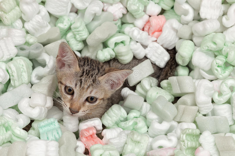 Cat playing in box of plastic foam stock photography