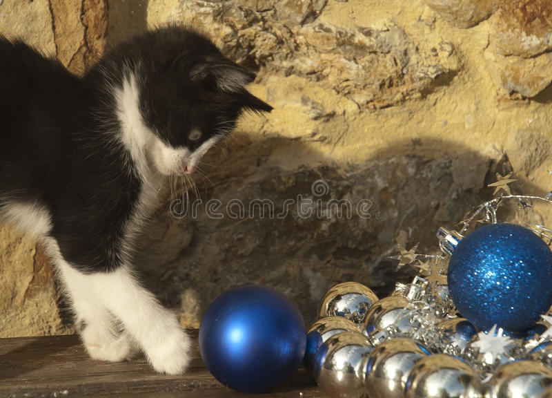 Cat playing with Christmas decorations royalty free stock photography