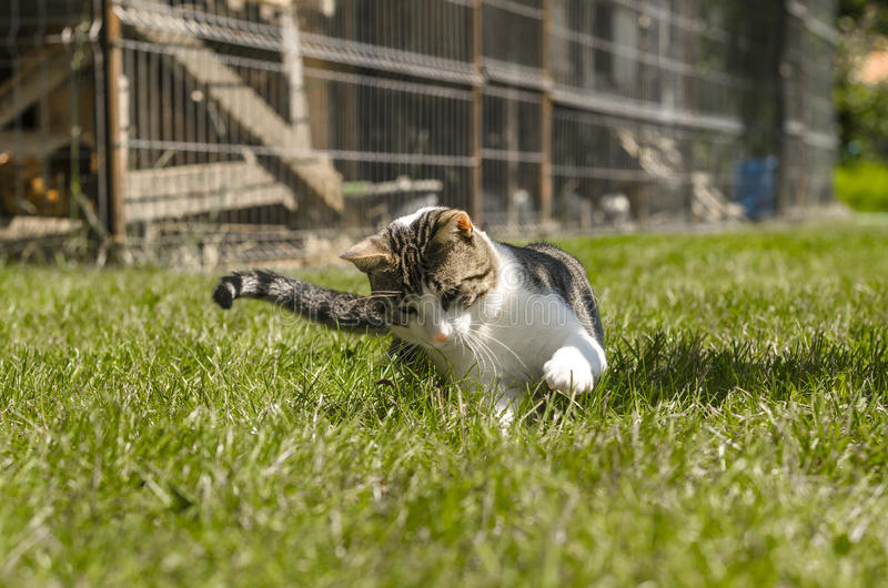 Cat playing stock images