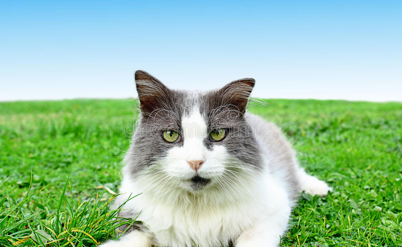 Cat playing on the grass close up royalty free stock image