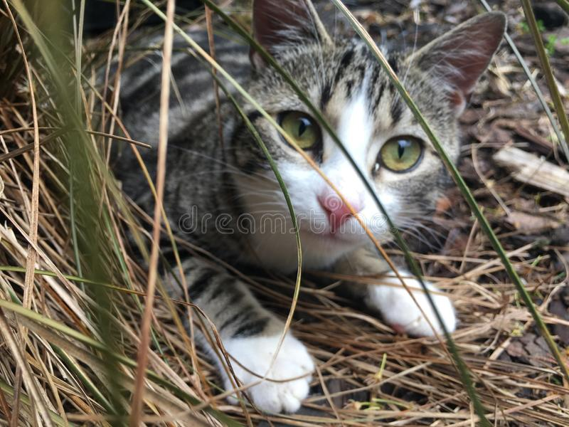 Cat playing in grass royalty free stock photography