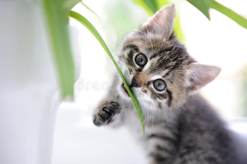 Cat playing with leaves royalty free stock images