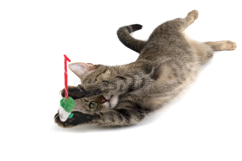 Download Cat Playing With Mouse stock image. Image of fixation - 1867729