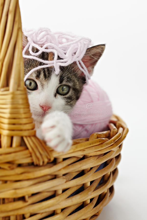 Cat playing with yarn stock photos