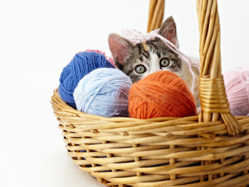 Download Cat playing with yarn stock photo. Image of playing, looking - 14861782