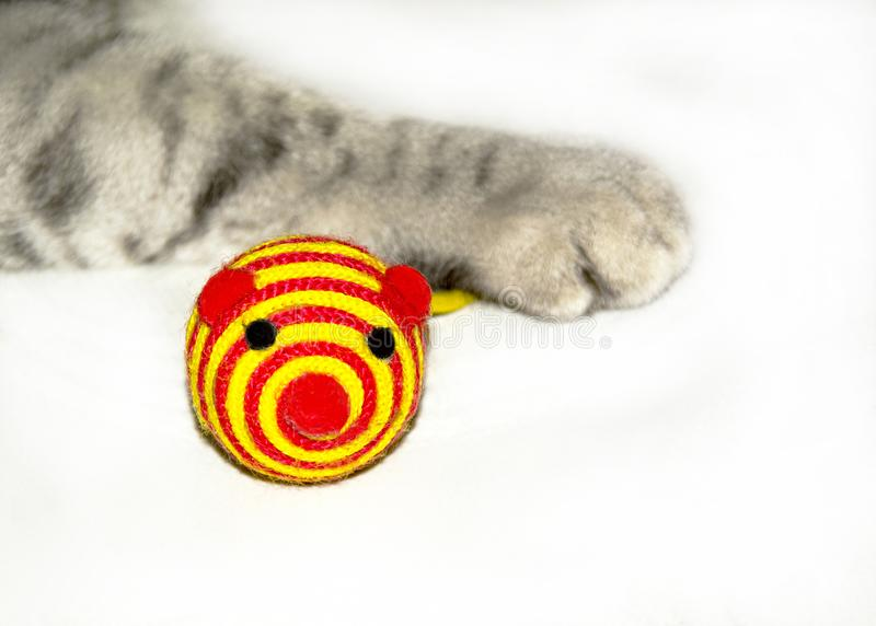 Cat playing with yellow -red toy mouse stock image