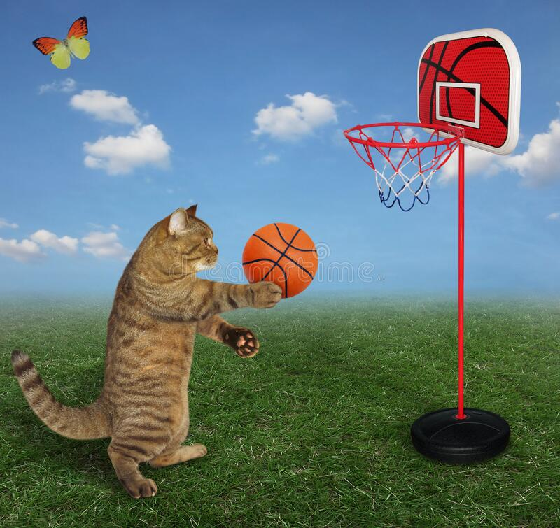 Free Cat Plays Basketball In Meadow 2 Royalty Free Stock Photo - 176781105