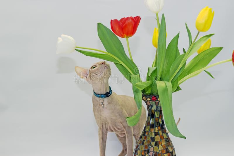 Cat plays with flowers stock photo