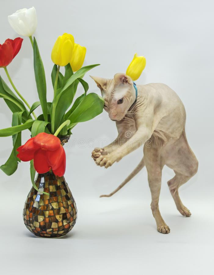 Cat plays with flowers royalty free stock photos